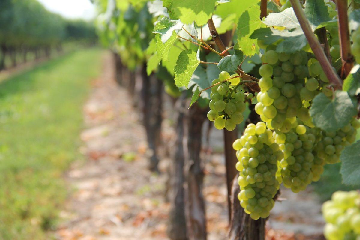 propriété vinicole